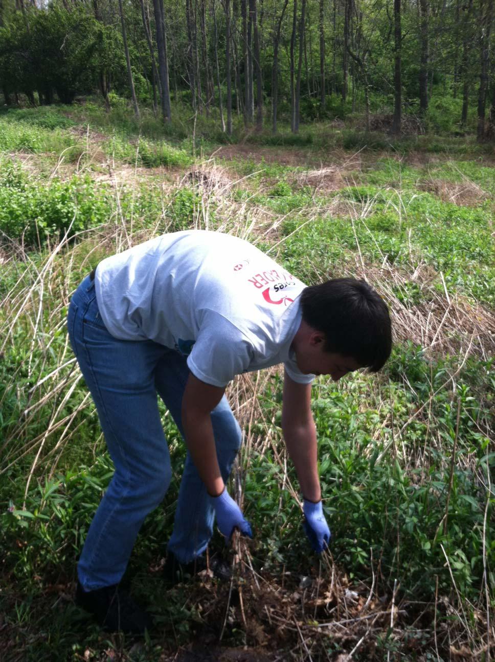 OnSIP team member clearing brush